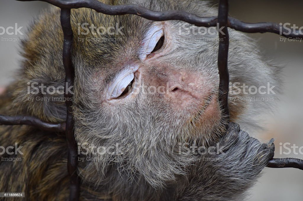 portrait of little monkey behind the wire
