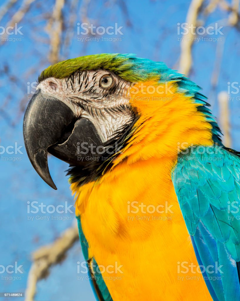 Portrait of macaw parrot on natural bacground stock photo