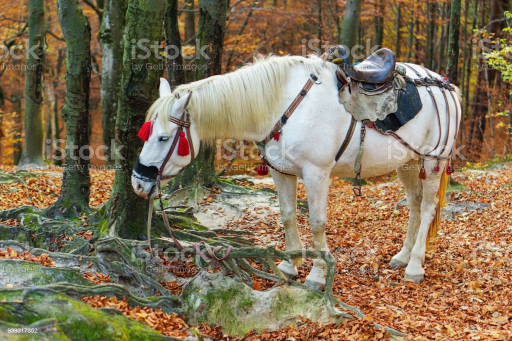 Portrait Of Magic Fairy Tale White Horse Stock Photo Download Image Now Istock