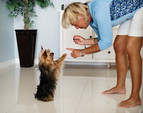 Portrait of mature LGBTQ women giving a treat to her yorkshire terrier dog. Cute healthy and tanned blonde woman in her fifties living the good life. Horizontal indoors waist up shot with copy space.