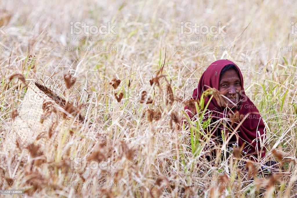 Canastilla Mas.Nepali Retrato De Mujer Con La Canastilla Mas De Los Campos