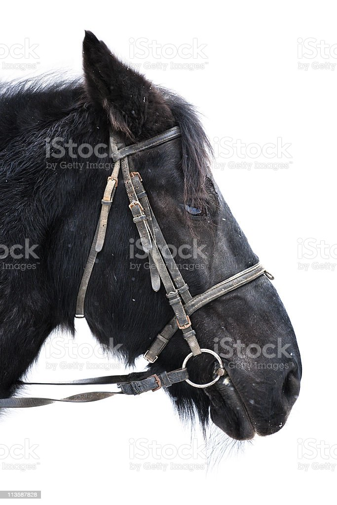 Portrait of Old Horse stock photo