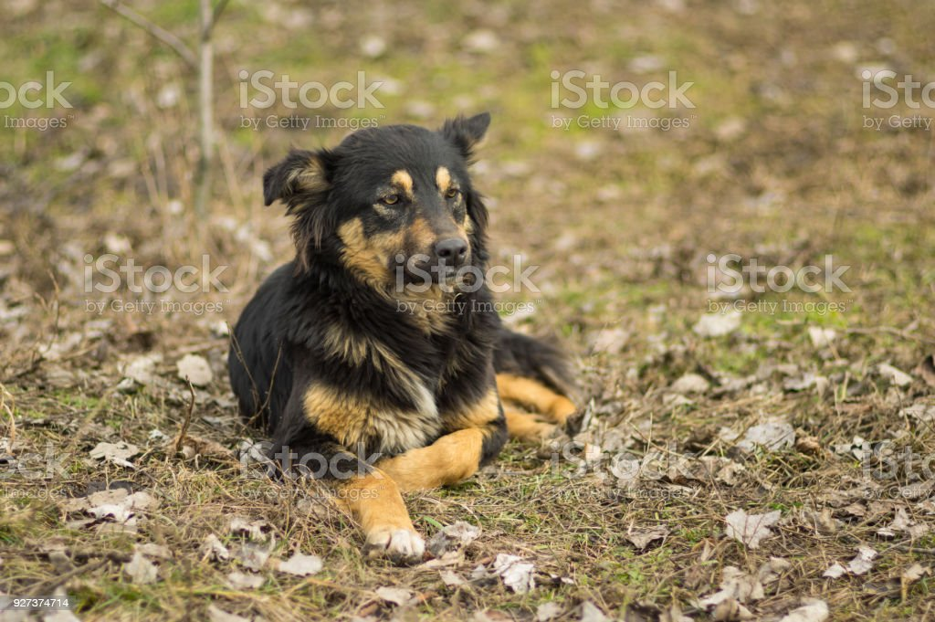 Portrait of old, wise stray dog on the street - Royalty-free Animal Stock Photo