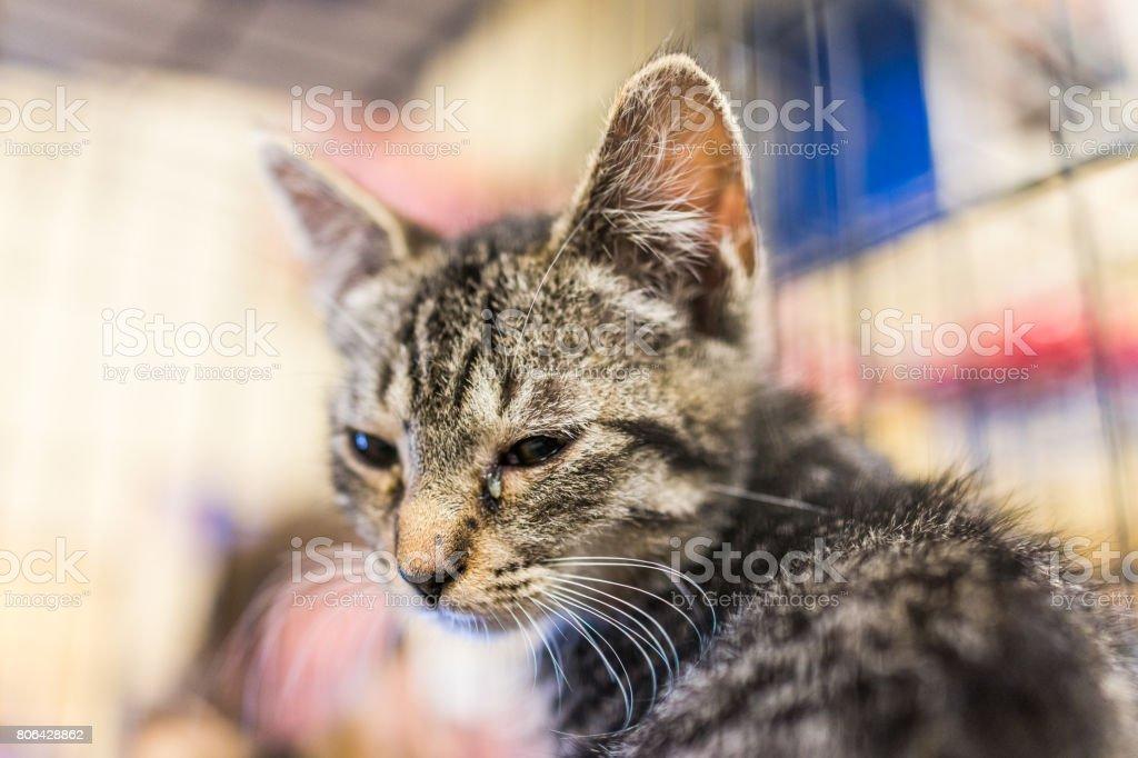 Retrato de uma triste tabby gatinho com infecção ocular na gaiola esperando por adoção - foto de acervo