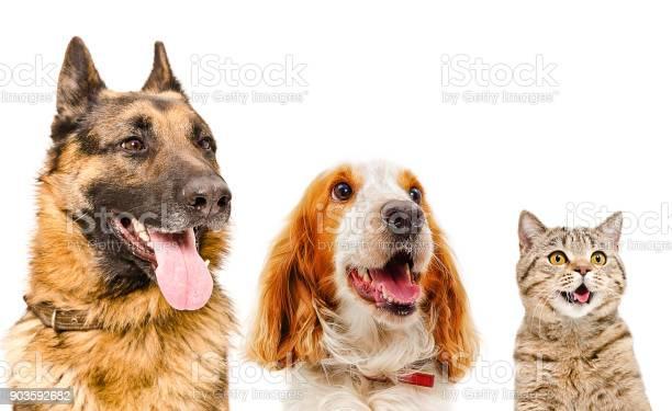 Portrait of pets closeup picture id903592682?b=1&k=6&m=903592682&s=612x612&h=0h74cgqw fz6u4mycnhgxyfsnh8kw0vn5sq6dmkjdbc=