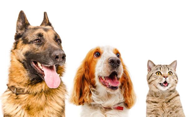 Portrait of pets closeup picture id903592682?b=1&k=6&m=903592682&s=612x612&w=0&h=oxuvuh28wzu8et0ub6kexbmvhtdm9ijrhzmijzm2ia0=