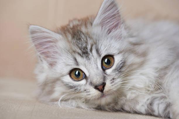 Portrait of playful cat stock photo