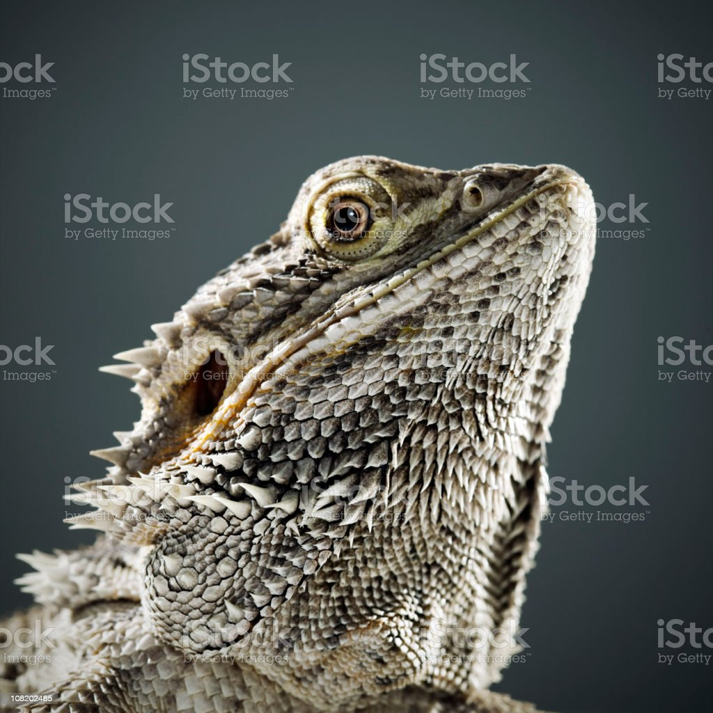 Portrait of Reptile royalty-free stock photo