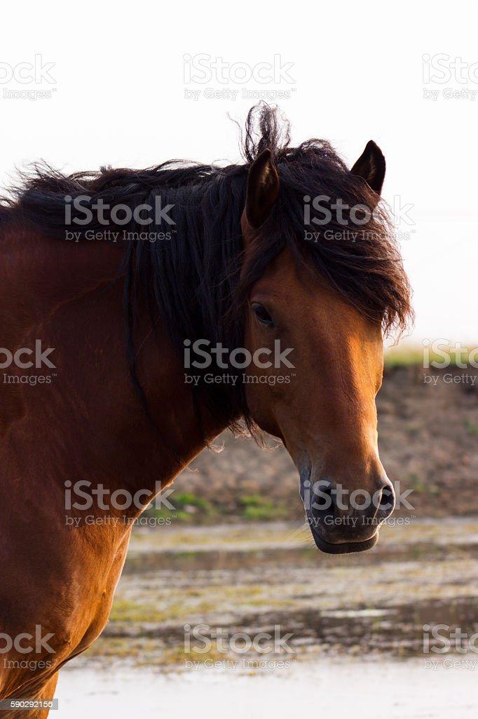 Portrait of rustic horse royaltyfri bildbanksbilder