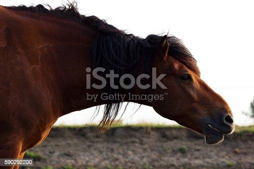 Portrait Of Rustic Horse-foton och fler bilder på Affisch