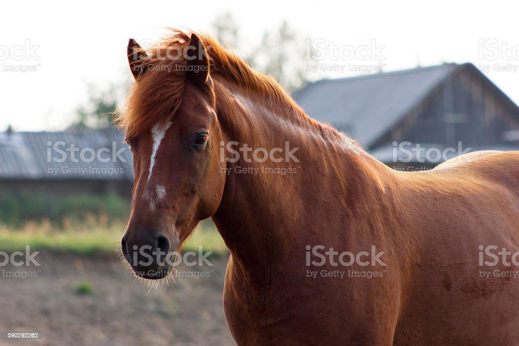 Portrait of rustic horse Стоковые фото Стоковая фотография