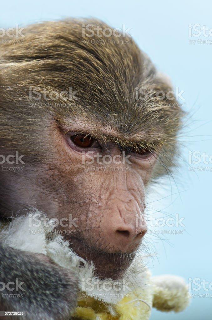 Portrait of sad little monkeys. Selective focus stock photo