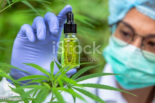 istock Portrait of scientist with mask, glasses and gloves researching and examining hemp oil in a greenhouse. Concept of herbal alternative medicine, cbd oil, pharmaceptical industry 1175649301
