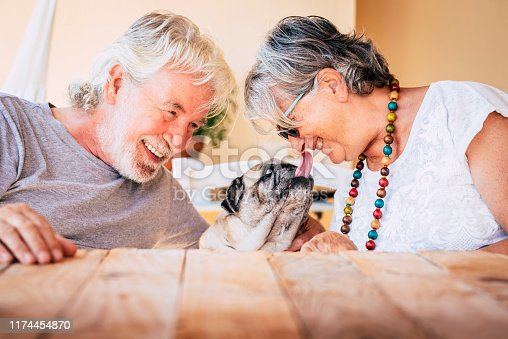 portrait of senior mature caucasian people  couple with funny pet pug dog kissing and having. fun together with love and happiness - concept of animal therapy for aged old persons