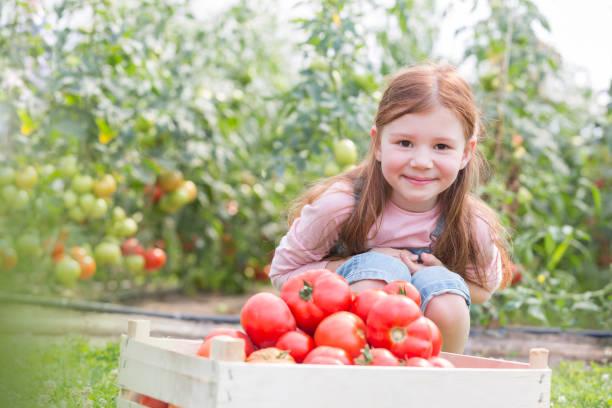Retrato de chica sonriente con tomates orgánicos frescos en cajón en la granja - foto de stock