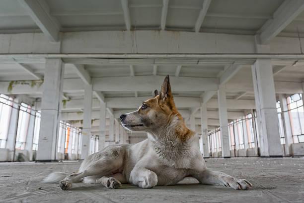 portrait of stray dog stock photo