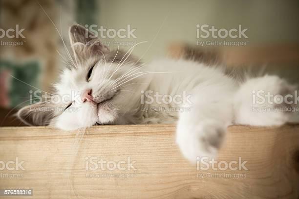 Portrait of sweet sleep white cat picture id576588316?b=1&k=6&m=576588316&s=612x612&h=ldsjpine2jcpvrsyzj8 qsuhkjro2obu0ss6tk3t7wk=