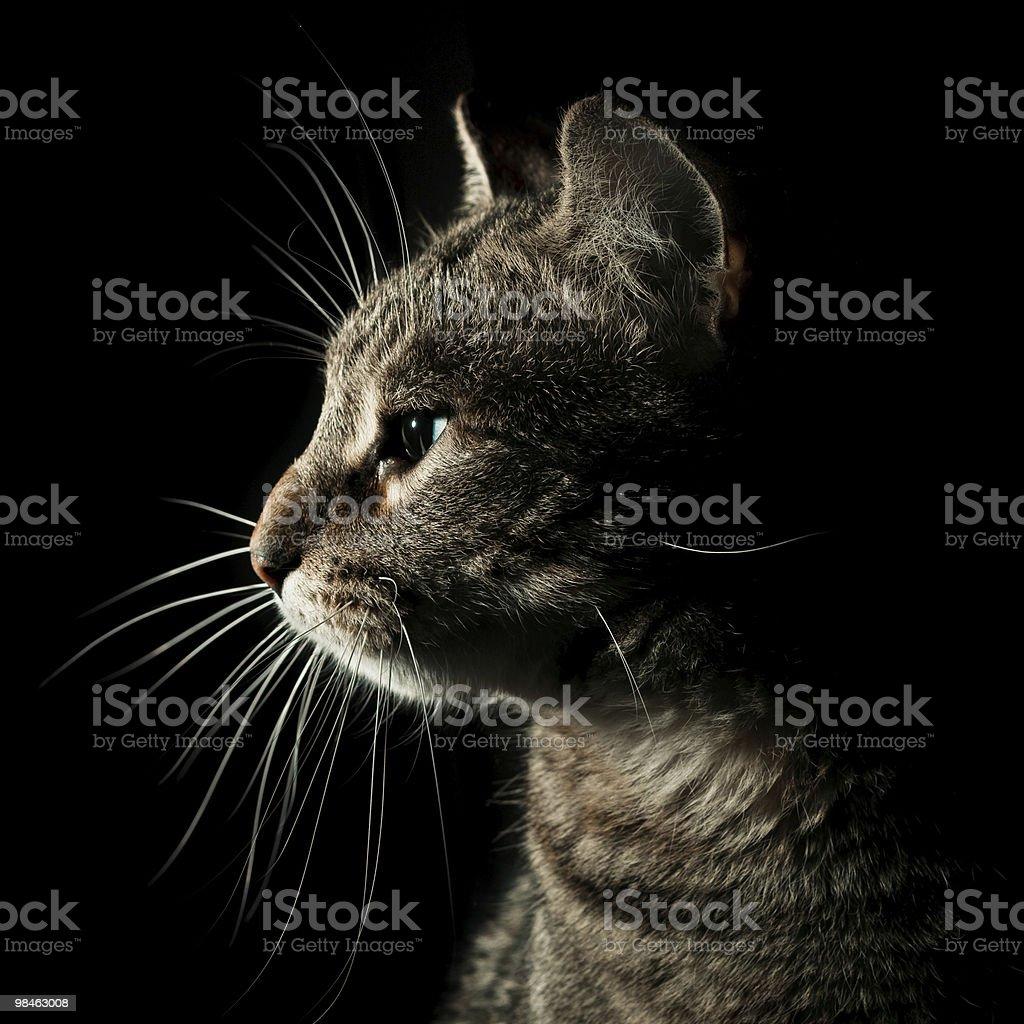 얼룩무늬고양이 자본가 인물 royalty-free 스톡 사진