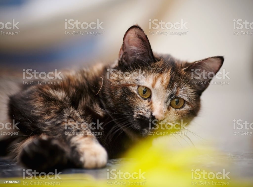Portrait of the cat of a multi-colored color stock photo
