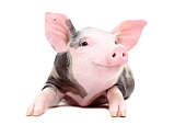 istock Portrait of the funny little pig 1154370943