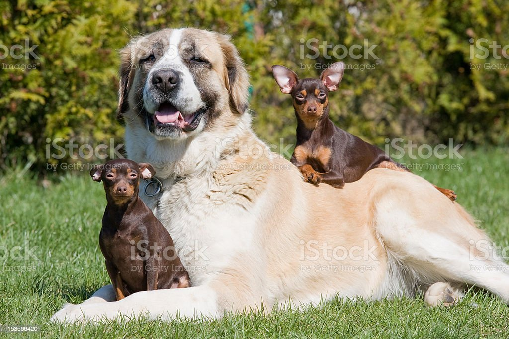 Portrait of three nice dogs stock photo