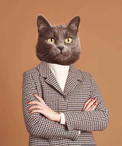 Portrait of trendy catwoman picture id1133601512?b=1&k=6&m=1133601512&s=612x612&w=0&h=okpl9lhgrres3f0mwqkv8xfgcjcdba2bw9bys2a zzk=
