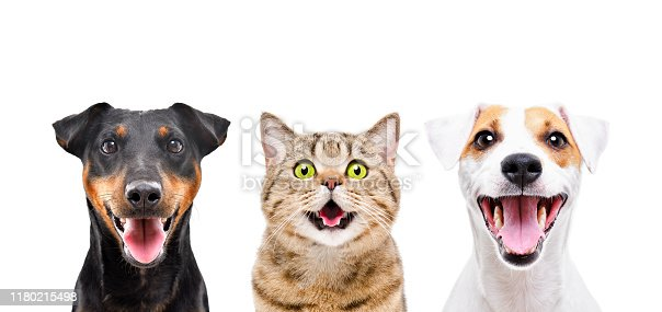 Portrait of two cute dogs and funny cat isolated on white background