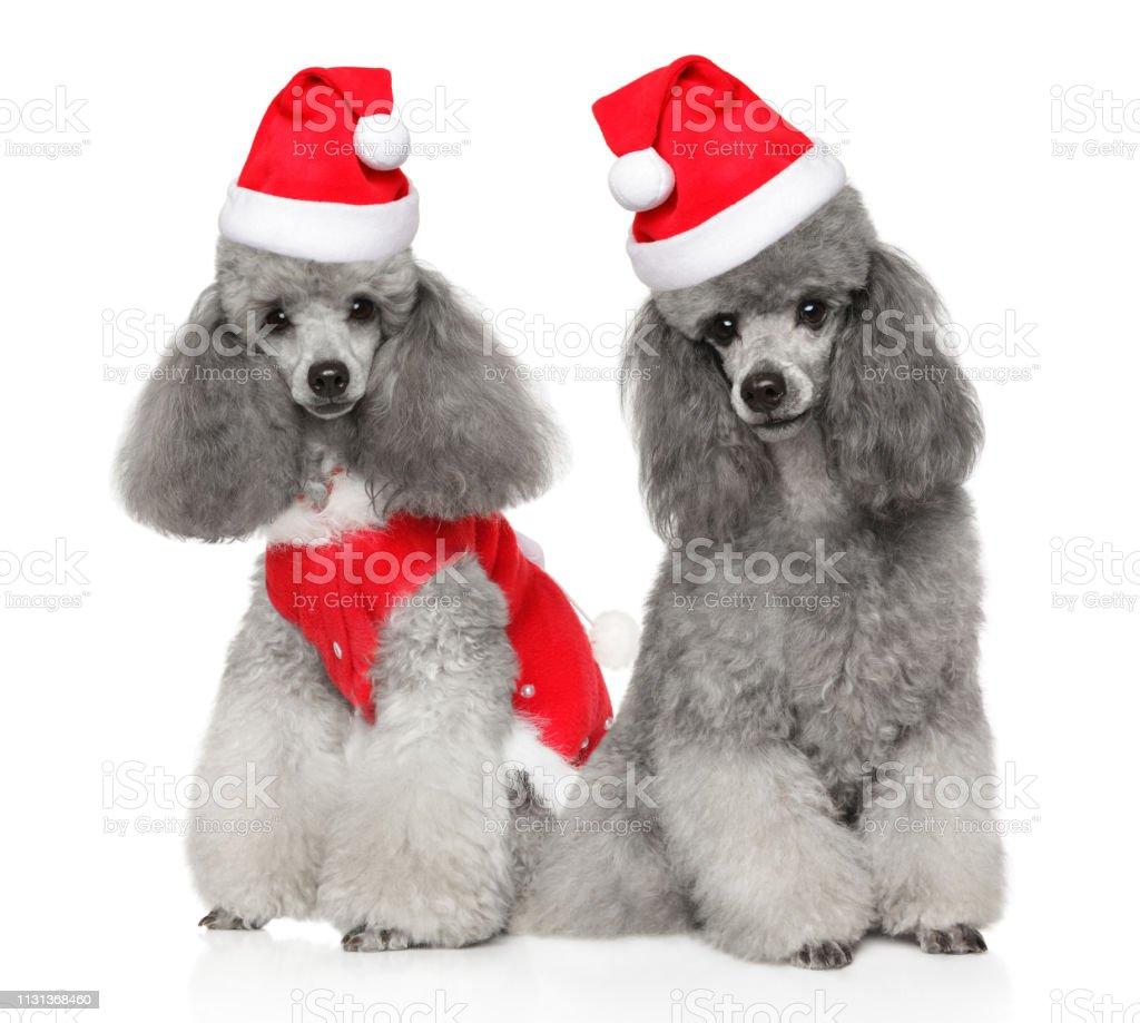 poodle hats