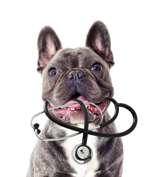Porträt von Tierarzt Hund und Stethoskop – Foto