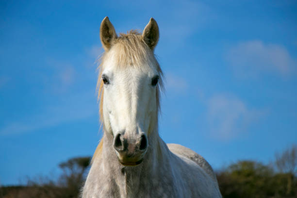 Portrait of white horse against blue sky stock photo