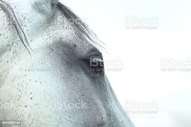 Portrait of white horse picture id644099144?b=1&k=6&m=644099144&s=612x612&h=voe2kgwu6f6txa0qq2fradrlzhgf2ww6ee q55gvw a=
