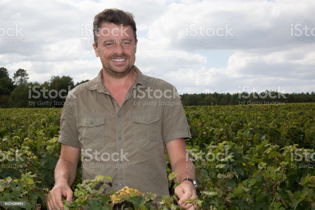 Portrait of winemaker standing at family vineyard stock photo