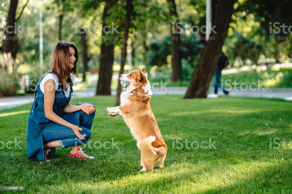 Portrait of woman with dog Welsh Corgi Pembroke in dog park stock photo