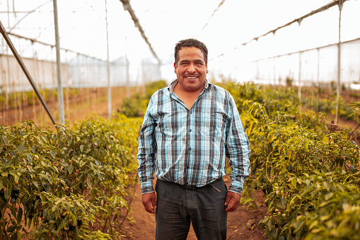 Portrait of Hispanic worker at the greenhouse