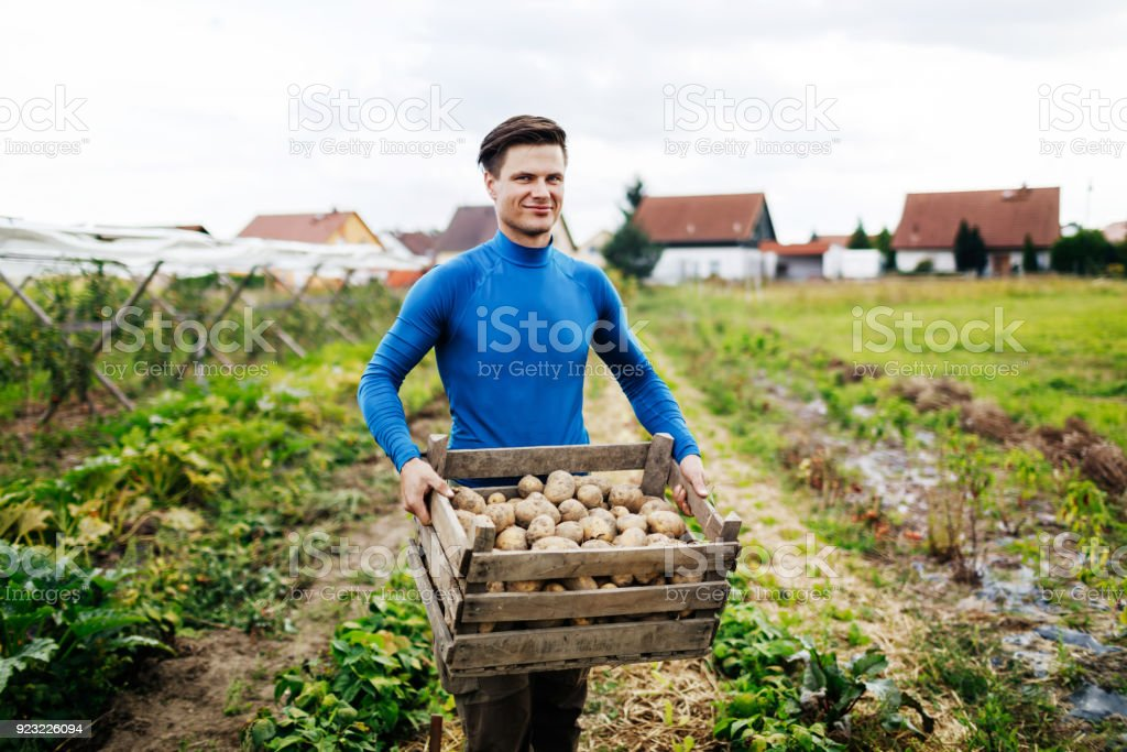 Portrait Of Young Urban Farmer Displaying Yield Of Potatoes stock photo