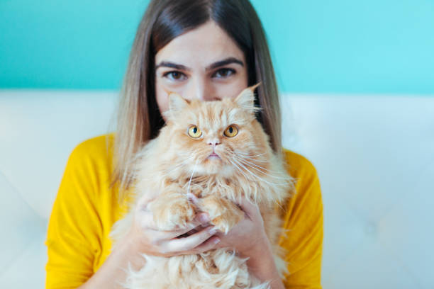 portrait of young woman and healthy cat stock photo