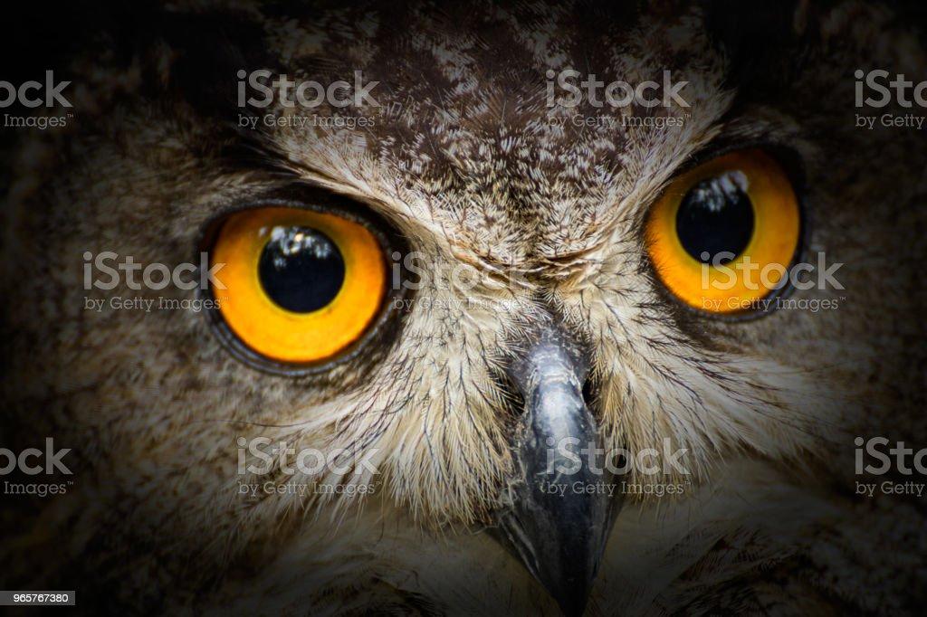 Portret uil met grote gele ogen met zwart vintage - Royalty-free Close-up Stockfoto