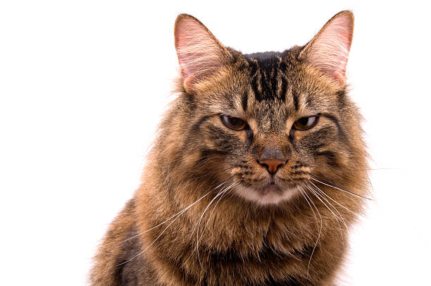 Katze Porträt Series – Foto