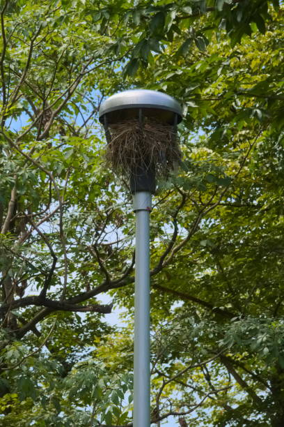 A portrait shot of a big, thick, bird's nest, overtaking a tall outdoor light, in a lush green, Thai park. stock photo