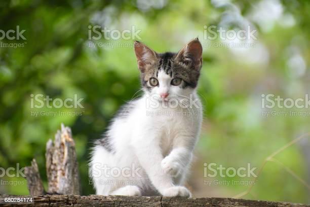 Portrait sweet little kitten outside picture id680284174?b=1&k=6&m=680284174&s=612x612&h= 0oaxskohputt3dsfaozgblnsec 34 dlispizldtv0=