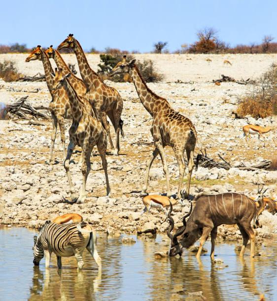 Portraitansicht eines belebten Wasserlochs mit Reflexion im Wasser von Zebra und Oryx – Foto