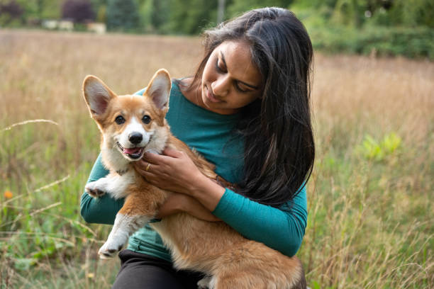 Portrait: young woman with corgi puppy, nature background stock photo