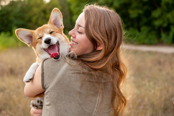 Portrait: young woman with laughing corgi puppy, nature background stock photo