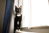 istock Portraits of a serious cat sitting on window sill 1304563453