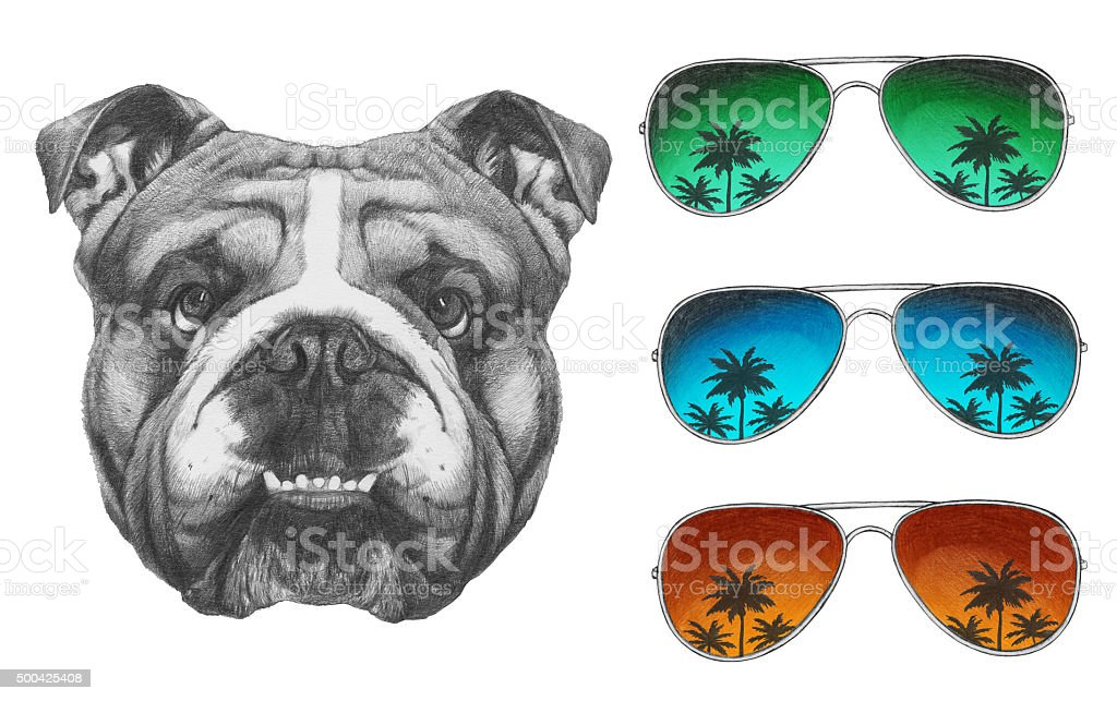 Portrat Of English Bulldog With Mirror Sunglasses Stock Photo Download Image Now Istock