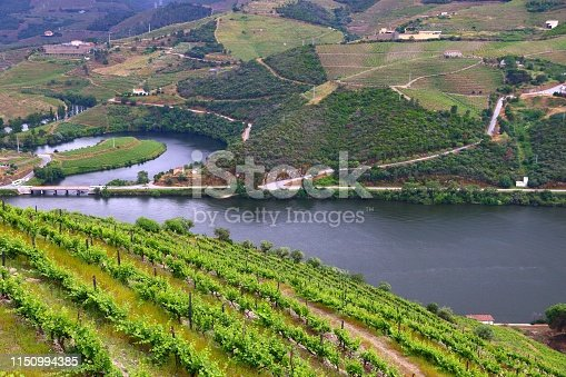Portugal wine region - vineyards on hills along Douro river valley. Alto Douro DOC.
