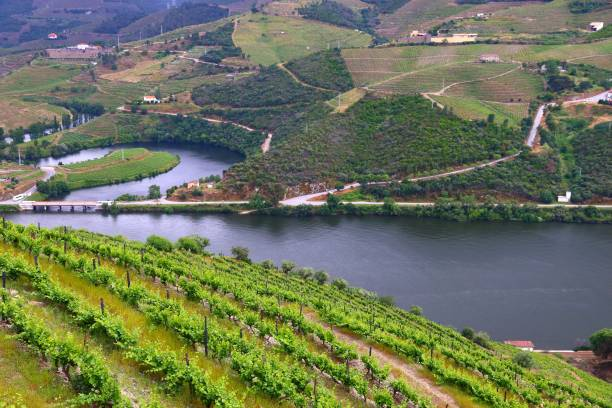 Portugal Douro River Portugal wine region - vineyards on hills along Douro river valley. Alto Douro DOC. duero stock pictures, royalty-free photos & images