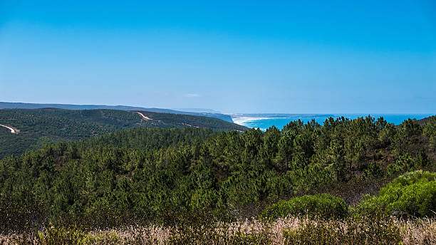 Portugal - Trees and ocean – Foto