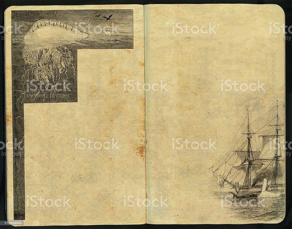 Portuguese man-of-war Sketch Pad royalty-free stock photo