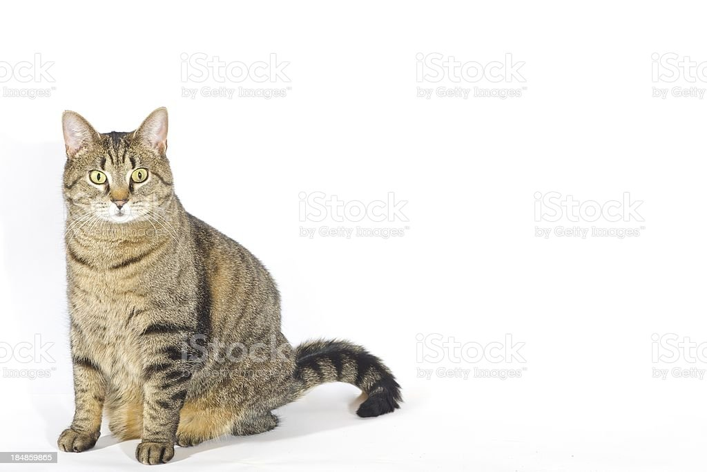 posing cat stock photo